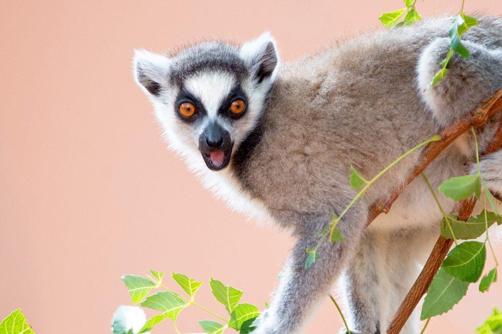 RN7 Road: Classical Madagascar Tour | Madagascar Tours